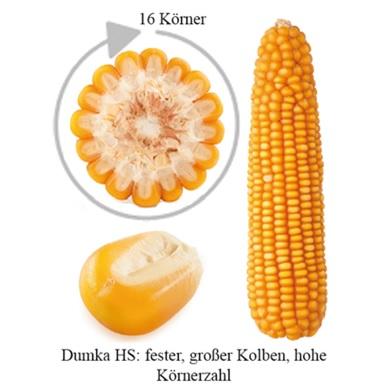 Dumka-HS-Kolben