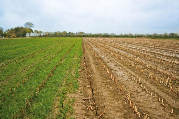 Mais-Untersaat Proterra Vergleich