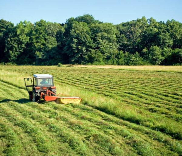 Mähweide Gras-Mischung Metos