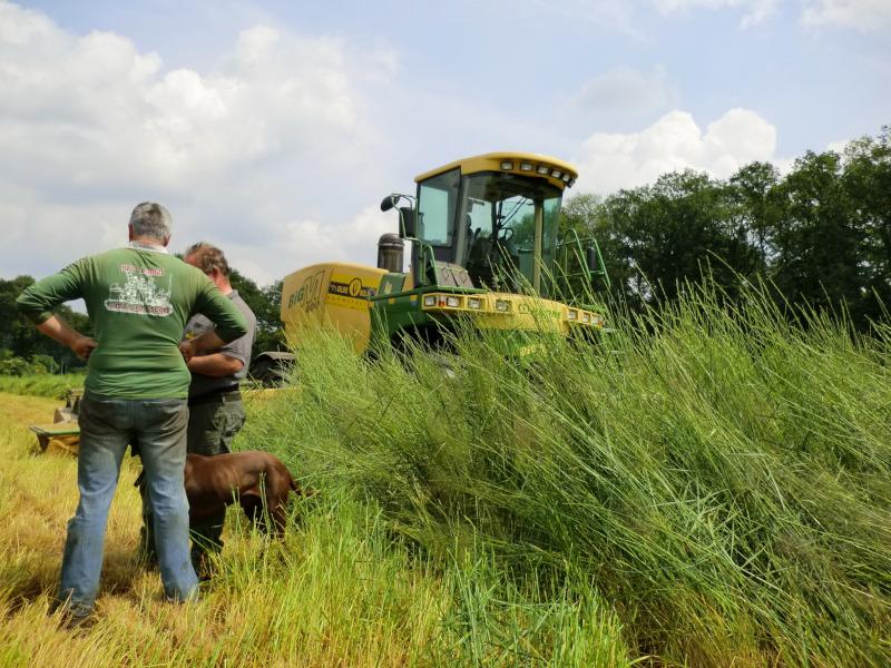 Riesen-Weizengras Alkar XL EbergyGras