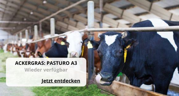 Ackergras A3 Pasturo