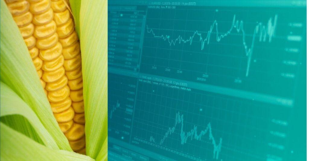 Wissenswertes, Zahlen, Daten Fakten zu Mais und zum Maisanbau